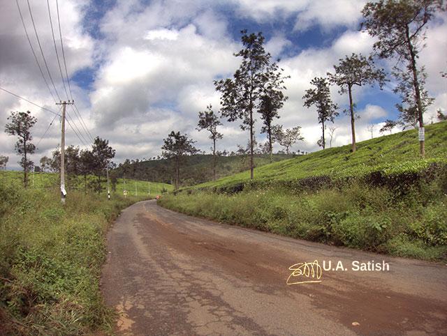 Kerala; Wayanad; Kalpetta; India; tea estates; sky; clouds; uasatish; trees;