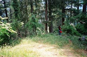 Kalatope Forest; Himachal Pradesh; India; forest; flowers; uasatish;