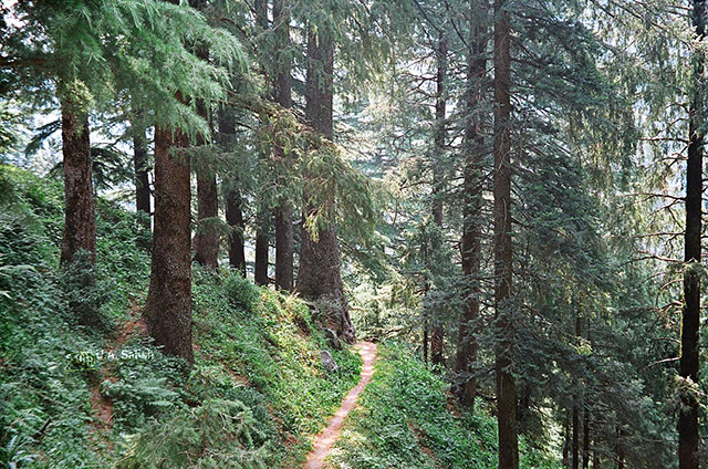 Kalatope Forest; Himachal Pradesh; India; walkway; Outer Himalaya; uasatish;
