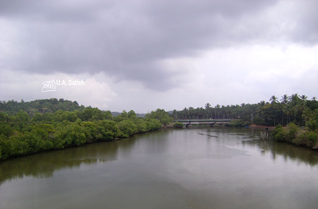 train travel; Kerala; Kannur to Kanhangad; North Malabar; uasatish; India; bridge; mangrove forests;