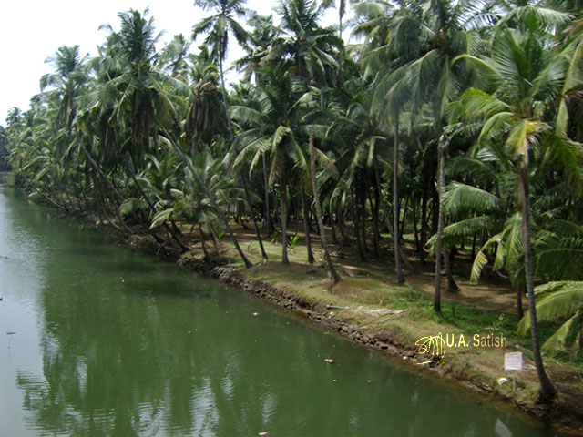 travel; train travel; Mumbai to Kannur; India; uasatish; Kerala; coconut trees; reflections;