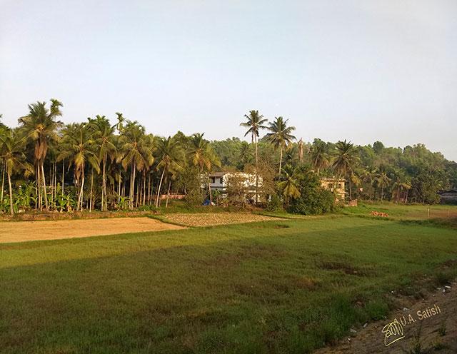 train travel; Kerala; Kannur to Kanhangad; North Malabar; uasatish; India; rice field;