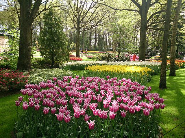 tulips; Keukenhof; gardens; Netherlands; flowers; Lisse; uasatish;