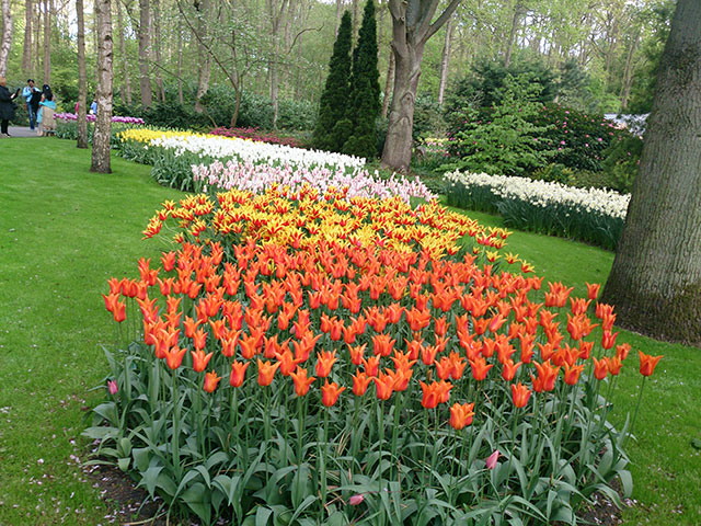 tulips; Keukenhof; gardens; Netherlands; flowers; Lisse; uasatish; many colours;