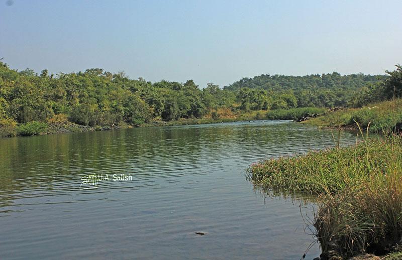 Barvi River; river; Badlapur; Maharashtra; uasatish;