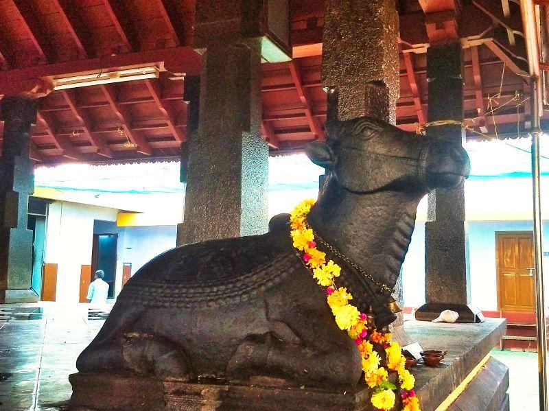 Nandi Bull; Sreekanteswara Temple; Mahadeva Temple; Kozhikode; Kerala; India; uasatish;