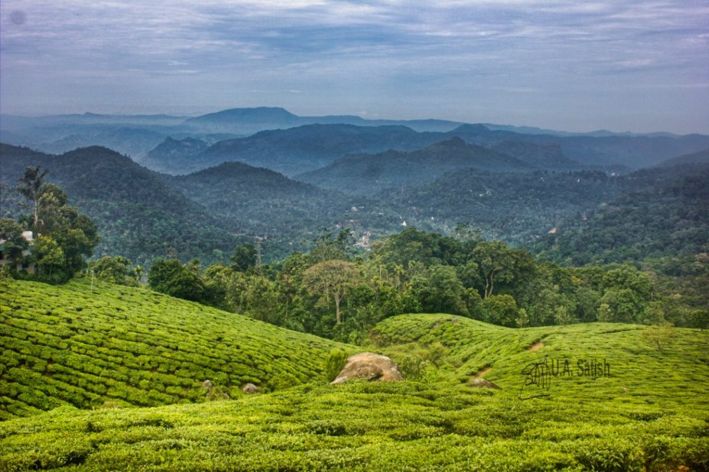 Rolling Hills of Munnar; Kerala God's Own Country; Munnar; uasatish;