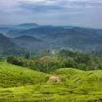 Munnar Experiences scenic hill station