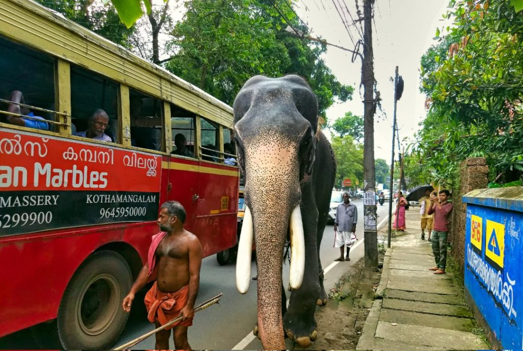 Temple Elephant and Red Bus; Kerala God's Own Country; Kochi; uasatish; elephant; mahout; road; Kerala;