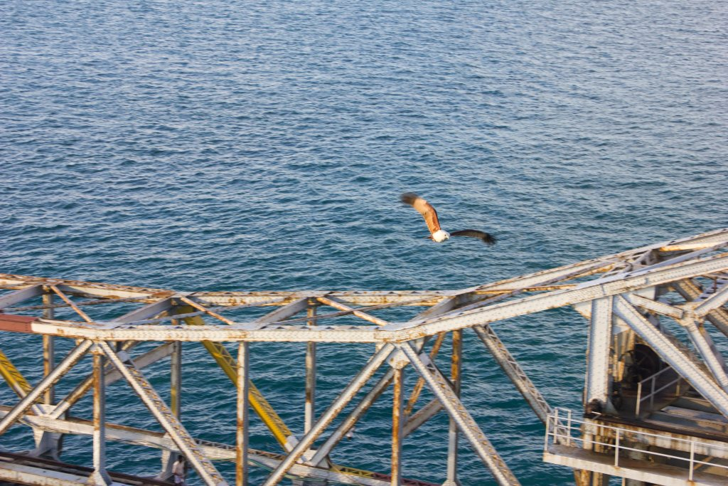 Pamban Bridge; Tamil Nadu; Rameswaram; eagle; uasatish;